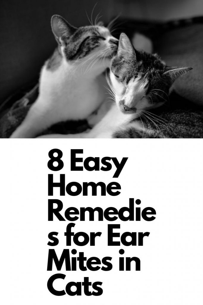 8 Home Remedies for Ear Mites in Cats - Quality ... Ear Mites In Cats